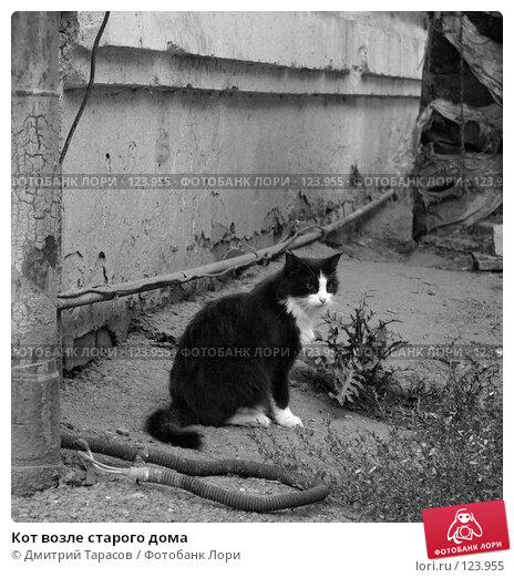 Кот возле старого дома, фото № 123955, снято 5 августа 2007 г. (c) Дмитрий Тарасов / Фотобанк Лори