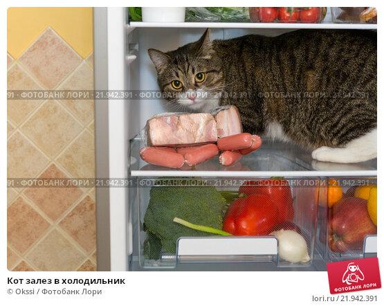 Купить «Кот залез в холодильник», фото № 21942391, снято 17 ноября 2015 г. (c) Okssi / Фотобанк Лори