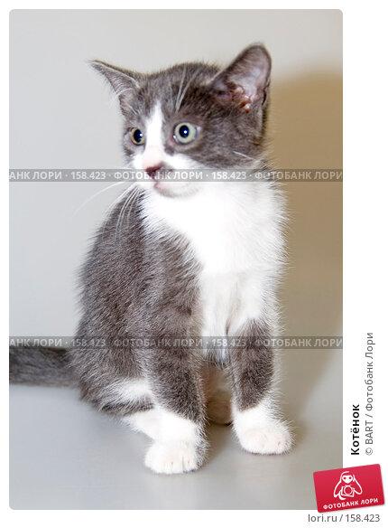 Котёнок, фото № 158423, снято 4 июня 2007 г. (c) BART / Фотобанк Лори