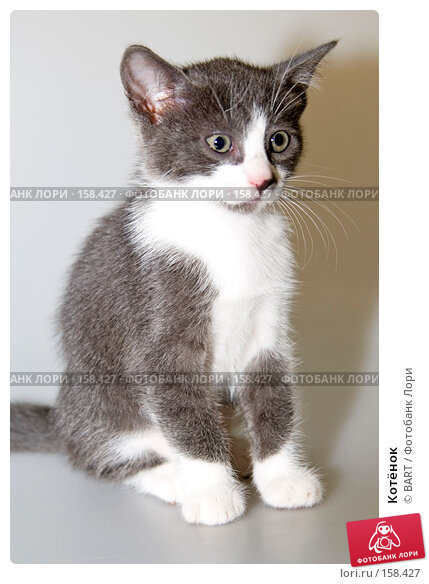 Котёнок, фото № 158427, снято 4 июня 2007 г. (c) BART / Фотобанк Лори