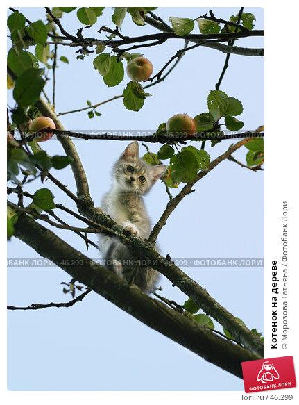 Котенок на дереве, фото № 46299, снято 31 августа 2004 г. (c) Морозова Татьяна / Фотобанк Лори