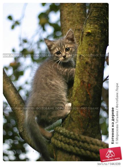 Котенок на дереве, фото № 144039, снято 31 августа 2004 г. (c) Морозова Татьяна / Фотобанк Лори