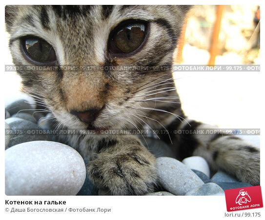 Котенок на гальке, фото № 99175, снято 3 октября 2007 г. (c) Даша Богословская / Фотобанк Лори