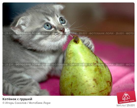 Котёнок с грушей, фото № 29031, снято 13 мая 2006 г. (c) Игорь Соколов / Фотобанк Лори