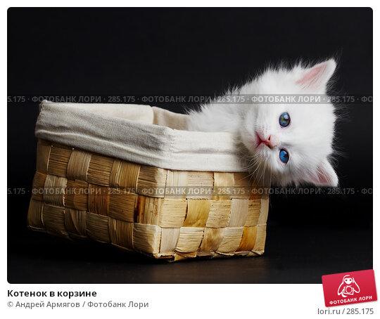 Купить «Котенок в корзине», фото № 285175, снято 26 марта 2007 г. (c) Андрей Армягов / Фотобанк Лори