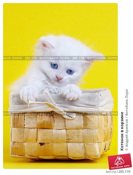 Котенок в корзине, фото № 285179, снято 28 марта 2007 г. (c) Андрей Армягов / Фотобанк Лори