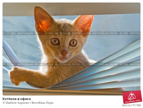 Котёнок в офисе, фото № 11743, снято 30 апреля 2006 г. (c) Vladimir Suponev / Фотобанк Лори