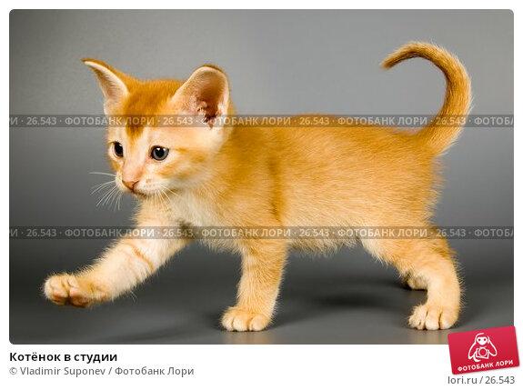 Котёнок в студии, фото № 26543, снято 17 марта 2007 г. (c) Vladimir Suponev / Фотобанк Лори