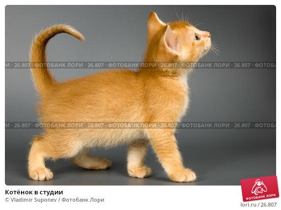 Котёнок в студии, фото № 26807, снято 17 марта 2007 г. (c) Vladimir Suponev / Фотобанк Лори