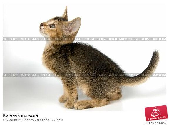 Купить «Котёнок в студии», фото № 31059, снято 8 апреля 2007 г. (c) Vladimir Suponev / Фотобанк Лори
