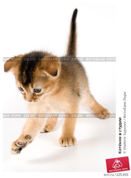Котёнок в студии, фото № 225855, снято 11 декабря 2007 г. (c) Vladimir Suponev / Фотобанк Лори