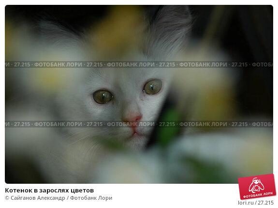 Котенок в зарослях цветов, фото № 27215, снято 24 июня 2006 г. (c) Сайганов Александр / Фотобанк Лори