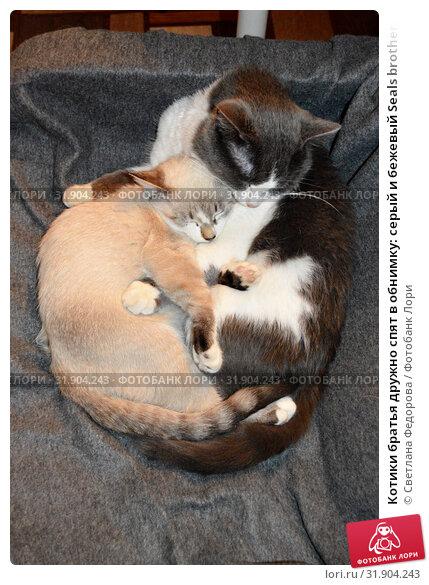 Котики братья дружно спят в обнимку: серый и бежевый Seals brothers together sleep in an embrace: gray and beige. Стоковое фото, фотограф Светлана Федорова / Фотобанк Лори