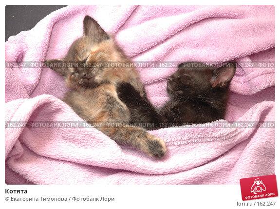 Котята, фото № 162247, снято 25 декабря 2007 г. (c) Екатерина Тимонова / Фотобанк Лори