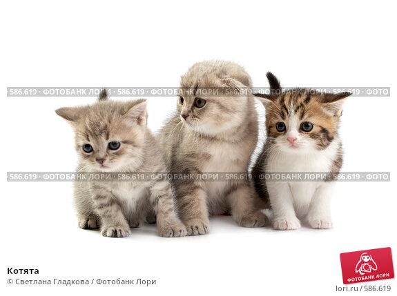 Купить «Котята», фото № 586619, снято 9 ноября 2008 г. (c) Cветлана Гладкова / Фотобанк Лори