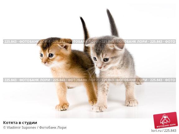 Котята в студии, фото № 225843, снято 11 декабря 2007 г. (c) Vladimir Suponev / Фотобанк Лори