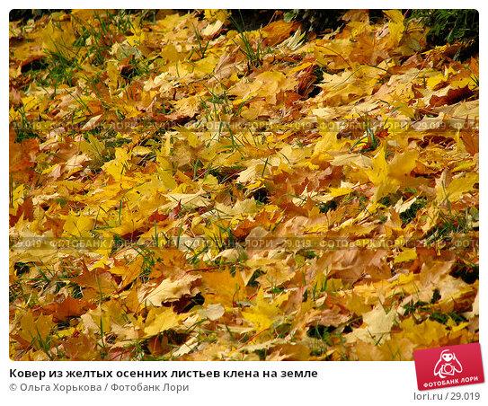 Ковер из желтых осенних листьев клена на земле, фото № 29019, снято 15 октября 2006 г. (c) Ольга Хорькова / Фотобанк Лори