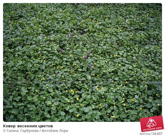 Ковер  весенних цветов, фото № 34607, снято 19 апреля 2006 г. (c) Галина  Горбунова / Фотобанк Лори
