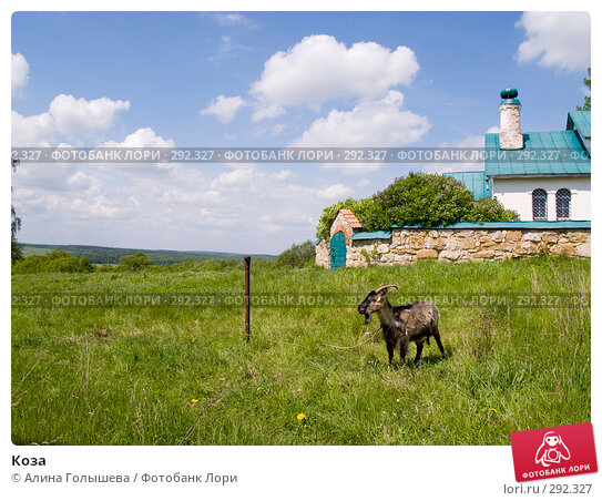 Купить «Коза», эксклюзивное фото № 292327, снято 18 мая 2008 г. (c) Алина Голышева / Фотобанк Лори