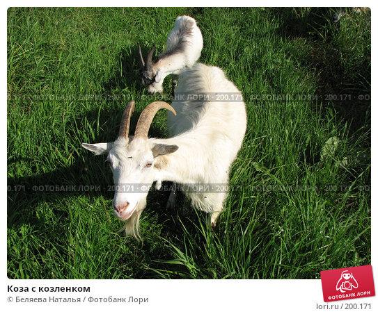 Коза с козленком, фото № 200171, снято 23 июля 2007 г. (c) Беляева Наталья / Фотобанк Лори