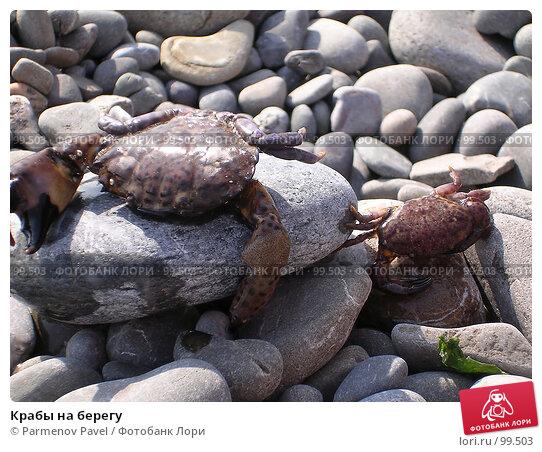 Купить «Крабы на берегу», фото № 99503, снято 14 августа 2006 г. (c) Parmenov Pavel / Фотобанк Лори