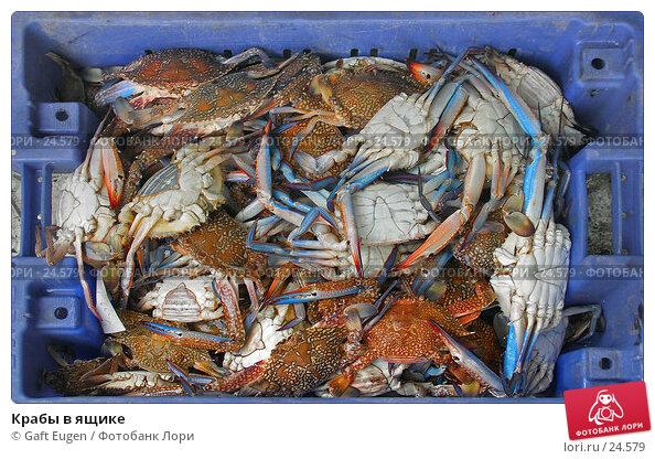 Крабы в ящике, фото № 24579, снято 12 декабря 2006 г. (c) Gaft Eugen / Фотобанк Лори