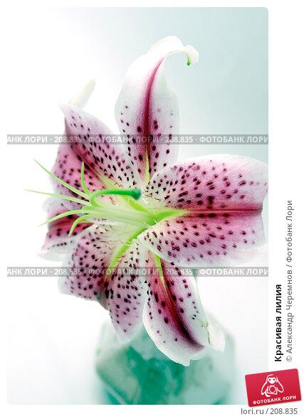 Купить «Красивая лилия», фото № 208835, снято 17 марта 2018 г. (c) Александр Черемнов / Фотобанк Лори