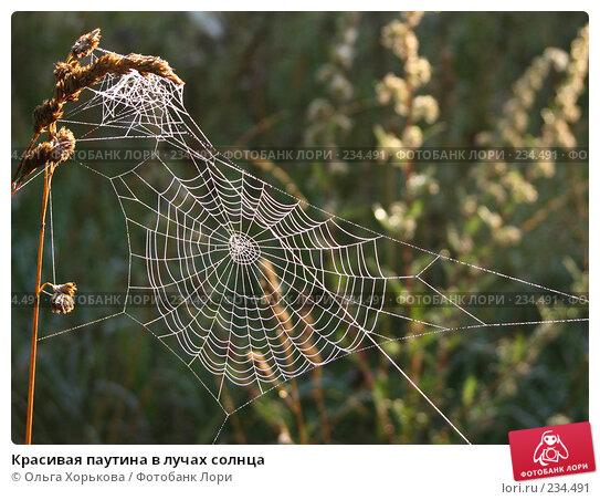 Красивая паутина в лучах солнца, фото № 234491, снято 9 августа 2007 г. (c) Ольга Хорькова / Фотобанк Лори
