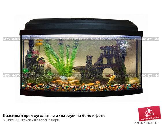 Красивый прямоугольный аквариум на белом фоне, фото № 6600475, снято 29 декабря 2013 г. (c) Евгений Ткачёв / Фотобанк Лори
