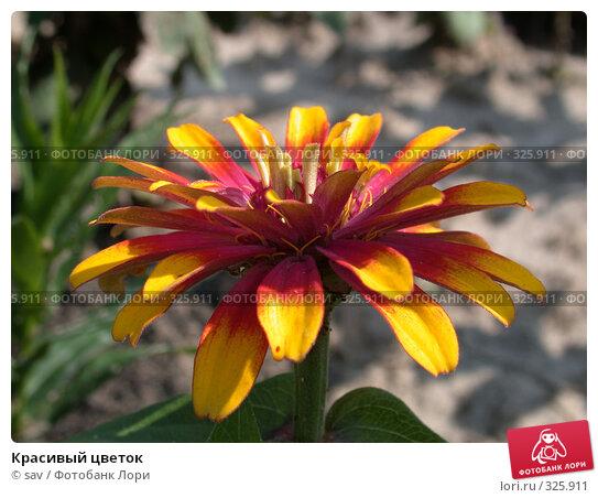 Красивый цветок, фото № 325911, снято 14 июля 2006 г. (c) sav / Фотобанк Лори