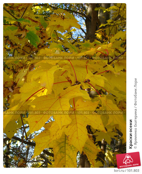 Купить «Краски осени», фото № 101803, снято 30 сентября 2007 г. (c) Яременко Екатерина / Фотобанк Лори