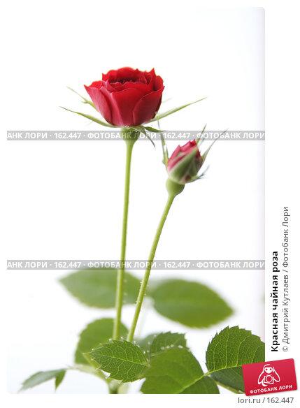 Красная чайная роза, фото № 162447, снято 24 декабря 2006 г. (c) Дмитрий Кутлаев / Фотобанк Лори