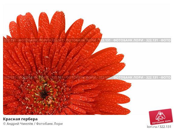 Купить «Красная гербера», фото № 322131, снято 14 июня 2008 г. (c) Андрей Чмелёв / Фотобанк Лори