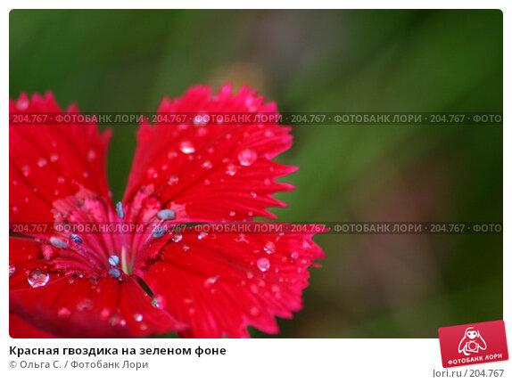 Красная гвоздика на зеленом фоне, фото № 204767, снято 7 августа 2006 г. (c) Ольга С. / Фотобанк Лори