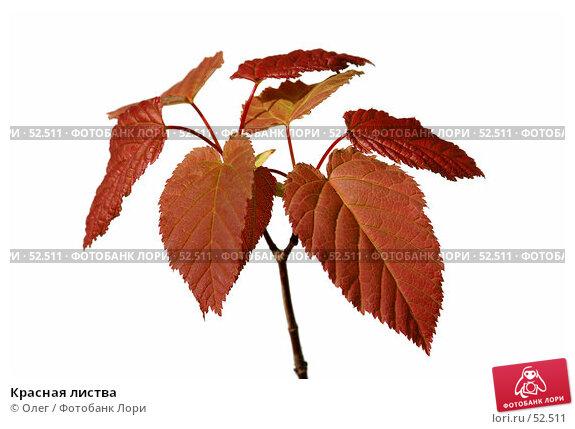 Красная листва, фото № 52511, снято 20 января 2017 г. (c) Олег / Фотобанк Лори