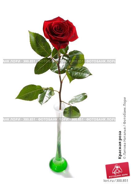 Красная роза, фото № 300851, снято 16 января 2008 г. (c) Литова Наталья / Фотобанк Лори