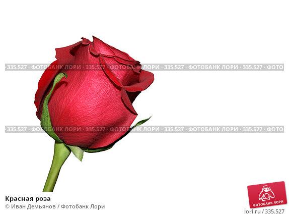 Купить «Красная роза», фото № 335527, снято 8 марта 2008 г. (c) Иван Демьянов / Фотобанк Лори