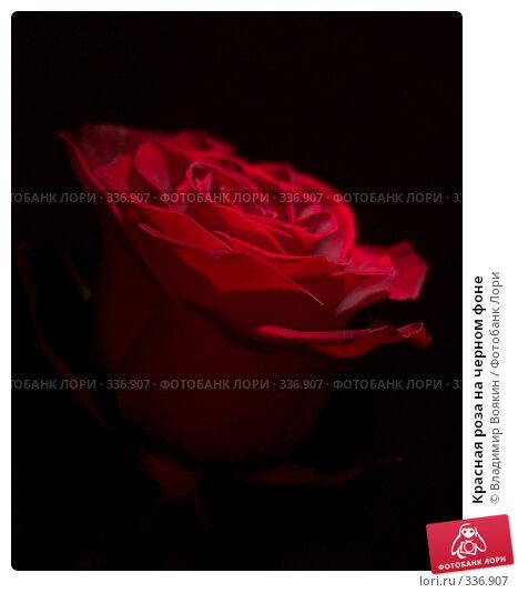 Красная роза на черном фоне, фото № 336907, снято 14 января 2008 г. (c) Владимир Воякин / Фотобанк Лори