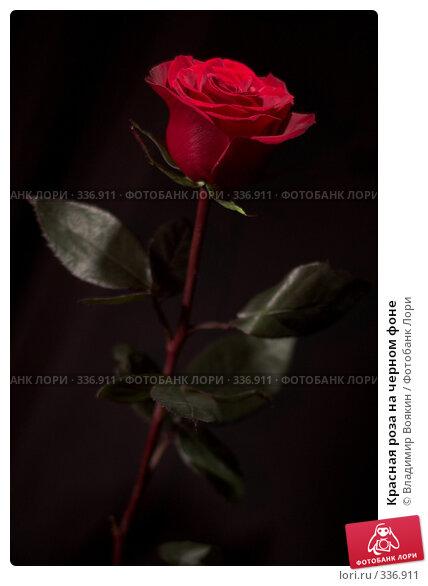 Красная роза на черном фоне, фото № 336911, снято 14 января 2008 г. (c) Владимир Воякин / Фотобанк Лори