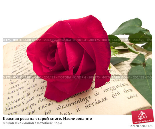 Красная роза на старой книге. Изолированно, фото № 200175, снято 8 февраля 2008 г. (c) Яков Филимонов / Фотобанк Лори
