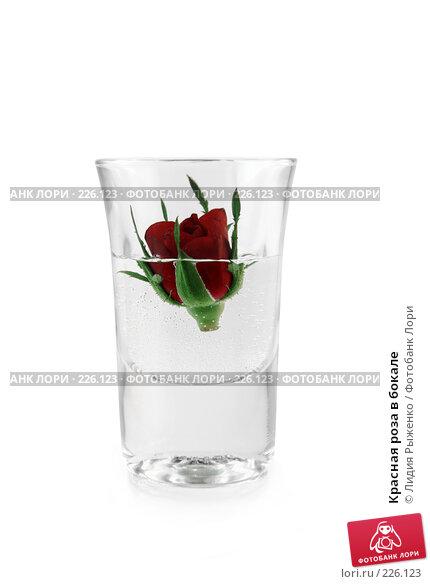 Красная роза в бокале, фото № 226123, снято 14 марта 2008 г. (c) Лидия Рыженко / Фотобанк Лори