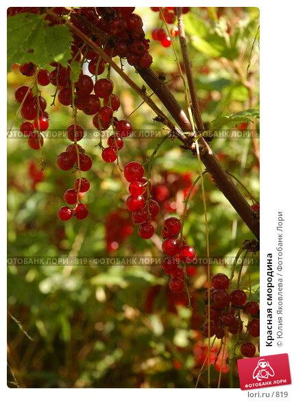 Красная смородина, фото № 819, снято 2 августа 2005 г. (c) Юлия Яковлева / Фотобанк Лори