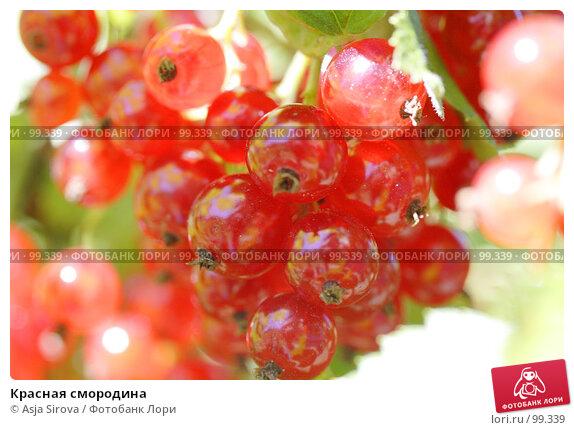 Красная смородина, фото № 99339, снято 21 июля 2007 г. (c) Asja Sirova / Фотобанк Лори