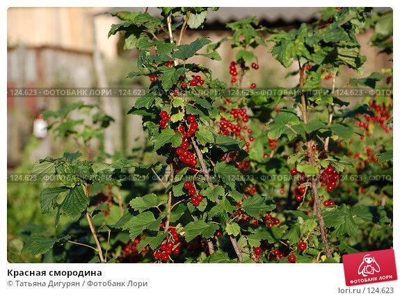 Красная смородина, фото № 124623, снято 14 июля 2007 г. (c) Татьяна Дигурян / Фотобанк Лори