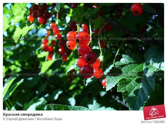 Красная смородина, фото № 126699, снято 8 июля 2007 г. (c) Сергей Девяткин / Фотобанк Лори
