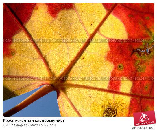 Красно-желтый кленовый лист, фото № 308059, снято 12 октября 2006 г. (c) A Челмодеев / Фотобанк Лори