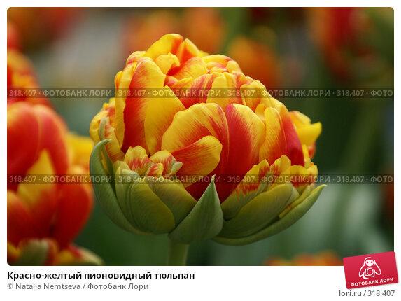 Красно-желтый пионовидный тюльпан, эксклюзивное фото № 318407, снято 8 апреля 2008 г. (c) Natalia Nemtseva / Фотобанк Лори