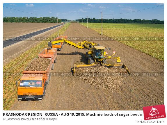 Купить «KRASNODAR REGION, RUSSIA - AUG 19, 2015: Machine loads of sugar beet into orange truck, In 2015 in Krasnodar region have collected record grain harvest - 102 million tons of grain», фото № 28211415, снято 19 августа 2015 г. (c) Losevsky Pavel / Фотобанк Лори
