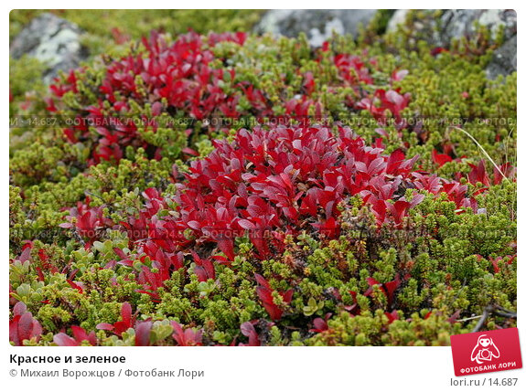 Красное и зеленое , фото № 14687, снято 18 августа 2007 г. (c) Михаил Ворожцов / Фотобанк Лори