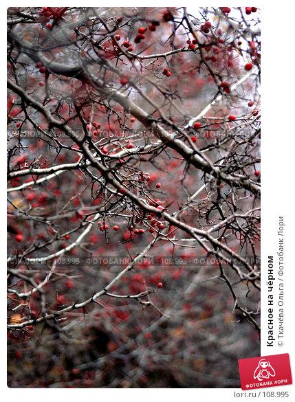 Красное на чёрном, фото № 108995, снято 26 октября 2007 г. (c) Ткачёва Ольга / Фотобанк Лори